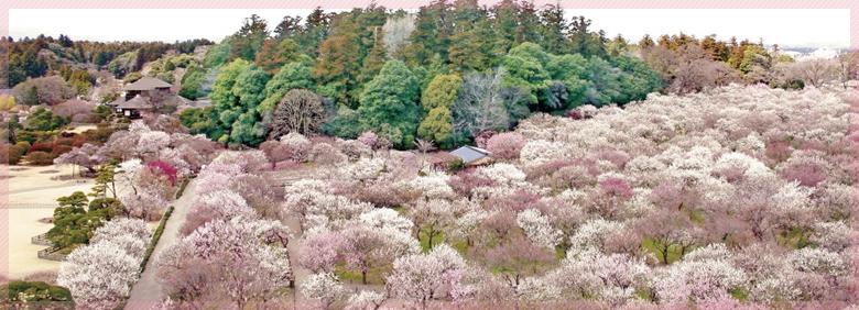 FUKUSHIMA-IBARAKI-TOKYO-NÚI PHÚ SỸ- TOCHIGI- KORIYAMA-FUKUSHIMA