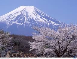 TOKYO – NÚI PHÚ SỸ - HỒ KAWAGUCHI LAVENDER – KYOTO - OSAKA