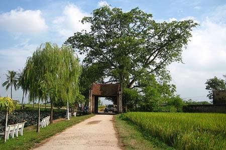 Đường Lâm