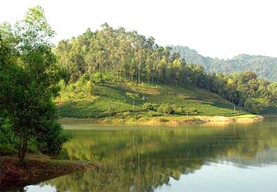 rừng núi cốc